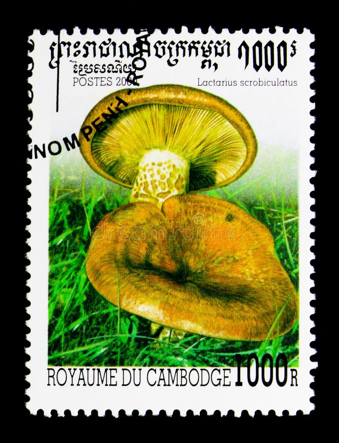 Lactarius scrobiculatus, Mushrooms serie, circa 2000. MOSCOW, RUSSIA - NOVEMBER 24, 2017: A stamp printed in Cambodia shows Lactarius scrobiculatus, Mushrooms royalty free stock photography