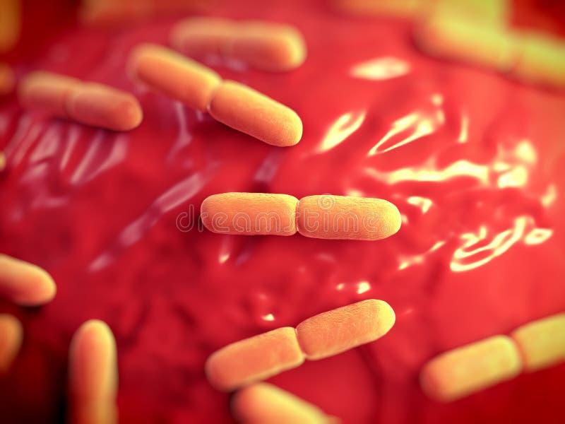 Lactobacillus bulgaricus bakterie ilustracji