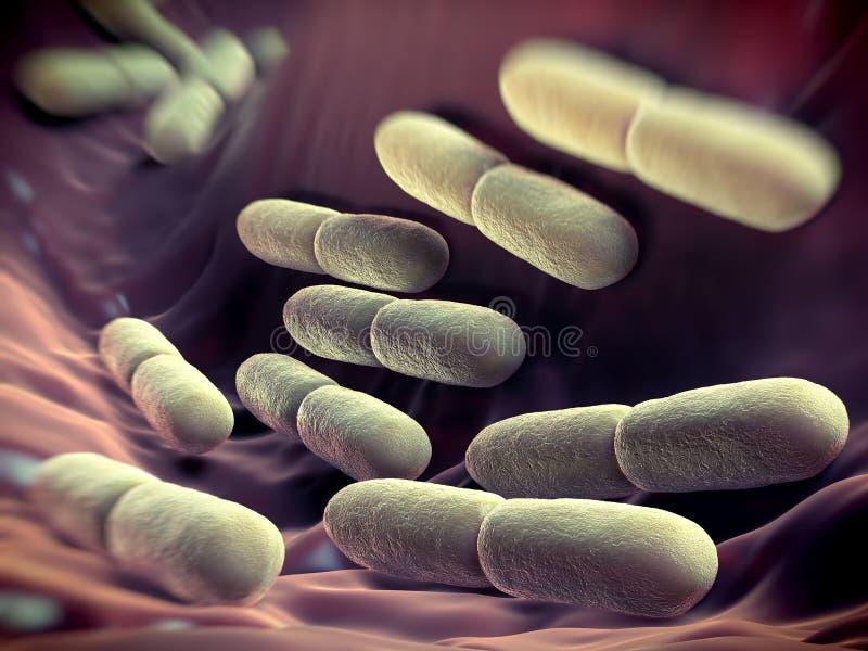 Lactobacillus bulgaricus bakterie ilustracja wektor