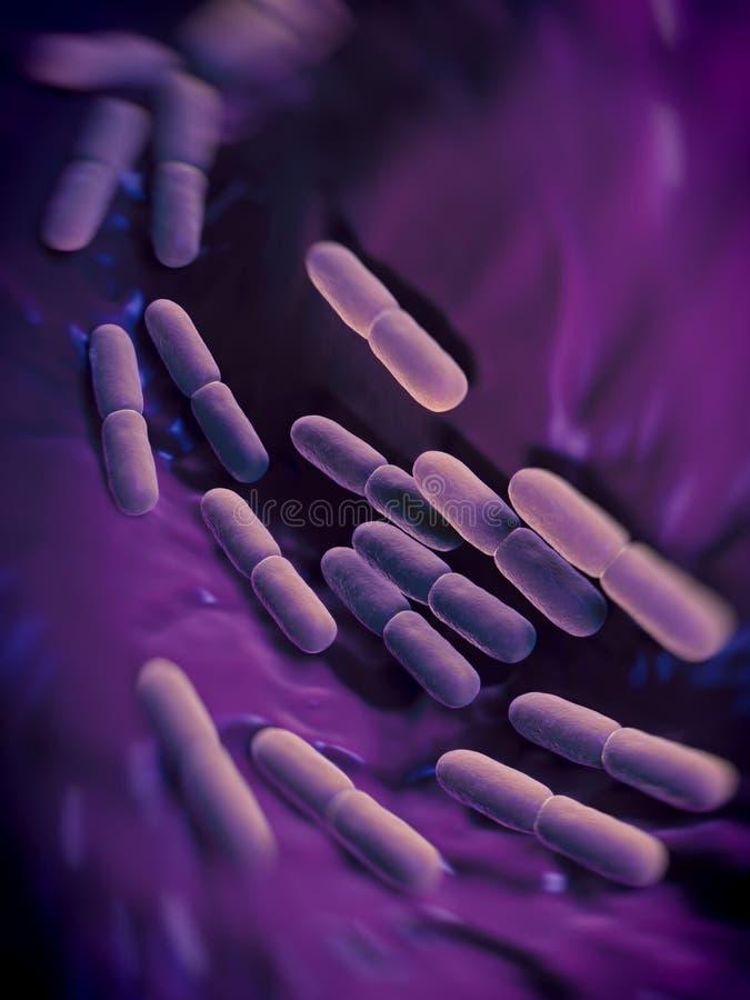 Lactobacillus bulgaricus bateria ilustracja wektor