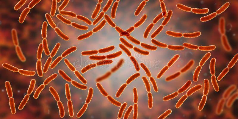 Lactobacilo de las bacterias, flora normal del intestino delgado stock de ilustración
