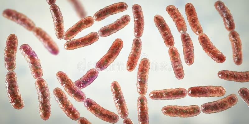 Lactobacilo de las bacterias, flora normal del intestino delgado ilustración del vector