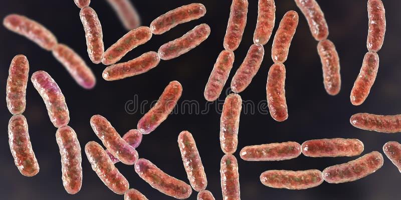 Lactobacilo de las bacterias, flora normal del intestino delgado libre illustration