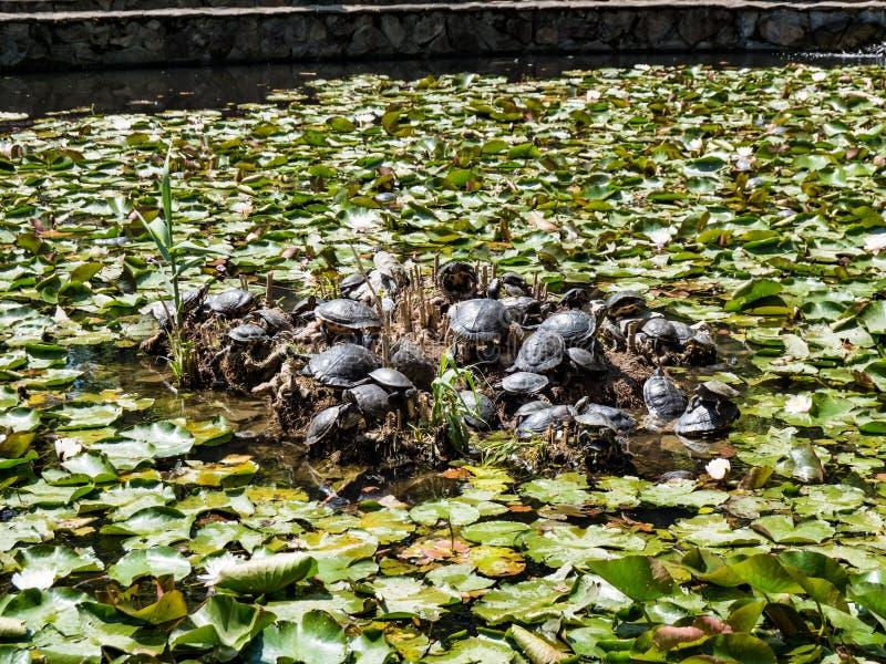 Lacul Cu Nuferi (Waterlilies Lake), Felix Baths - Baile Felix, B ...