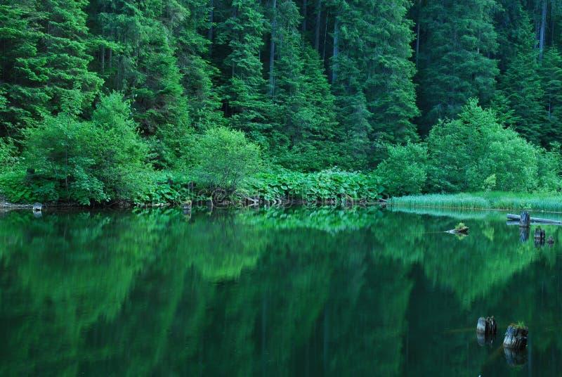 Lacul Rosu stockfoto