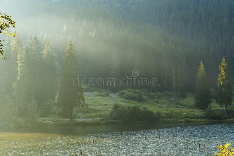 Lacul Rosu - Czerwony jezioro w lato ranku wsch?d s?o?ca Carpathians, Rumunia obraz stock