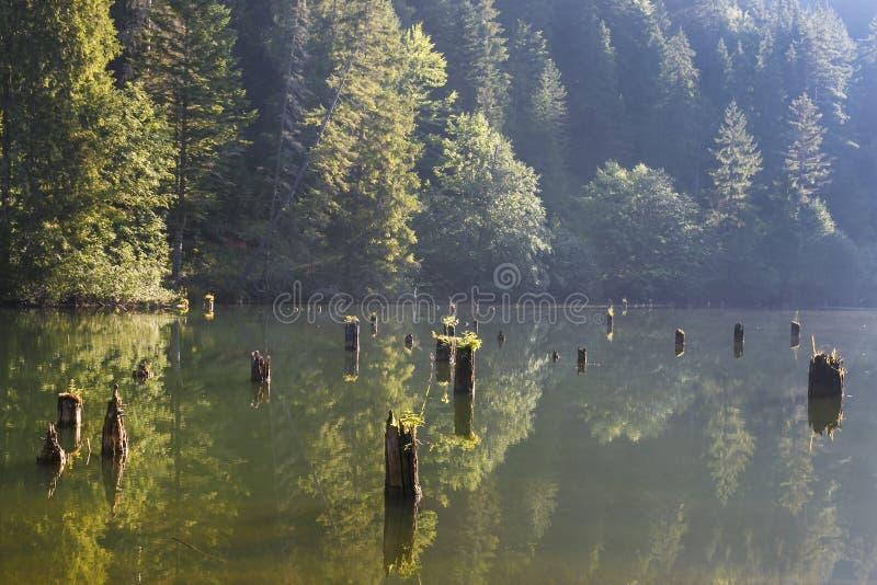 Lacul Rosu - Czerwony jezioro w lato ranku wsch?d s?o?ca Carpathians, Rumunia fotografia royalty free