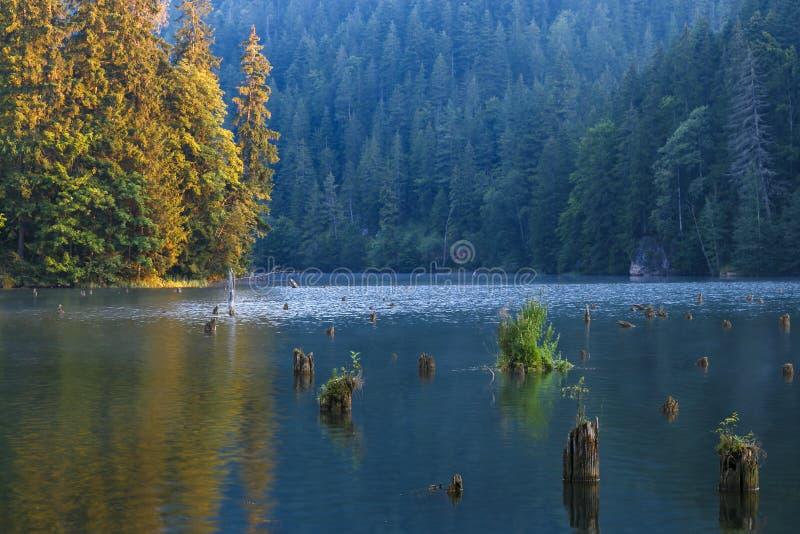 Lacul Rosu - Czerwony jezioro w lato ranku wsch?d s?o?ca Carpathians, Rumunia zdjęcie royalty free