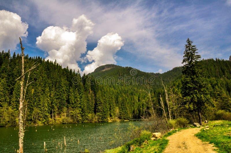 Lacul Rosu, halny jezioro w głębokim lesie zdjęcia stock