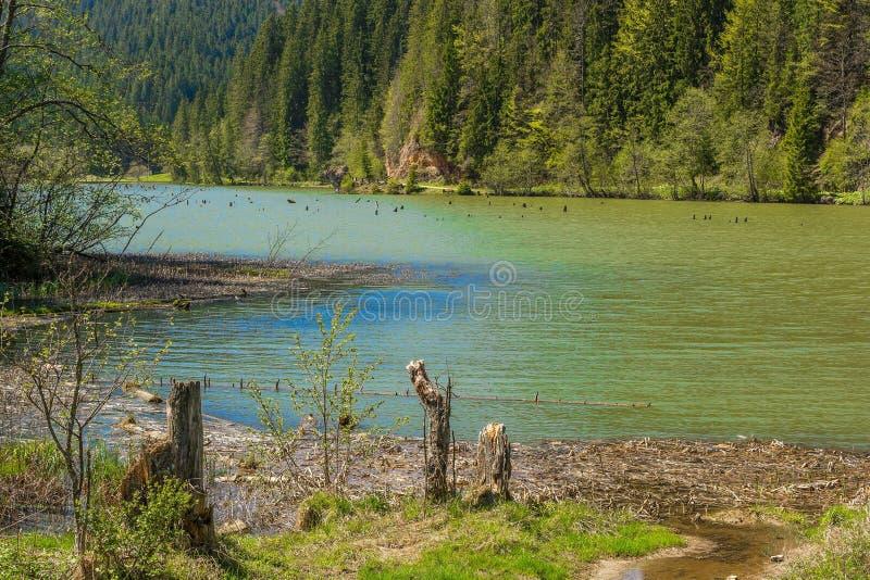 Lacul Rosu - lago rojo, Cárpatos del este, Rumania imagenes de archivo