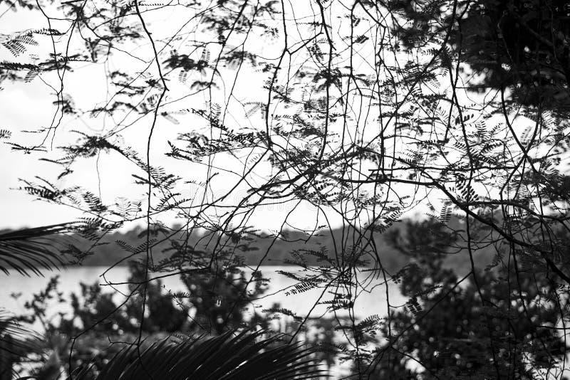 Lacy Rainforest stockfoto