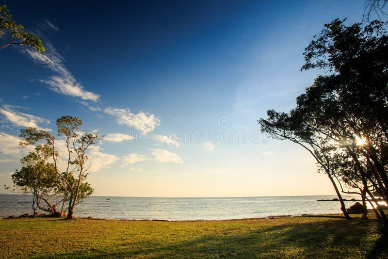 Lacy Trees auf Strand-Rasen-Sonnenlicht durch Niederlassungen bei Sonnenuntergang lizenzfreie stockbilder