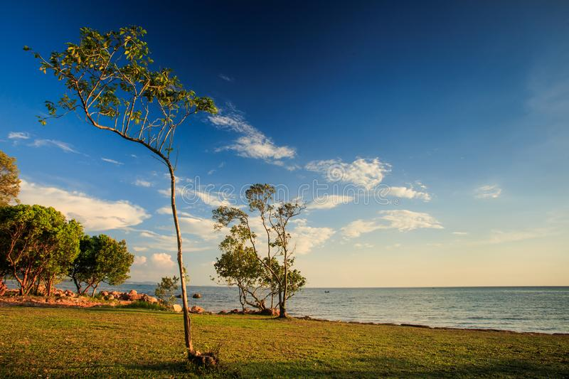 Lacy Trees on Beach Lawn Sunlight through Branches at Sunset royalty free stock images