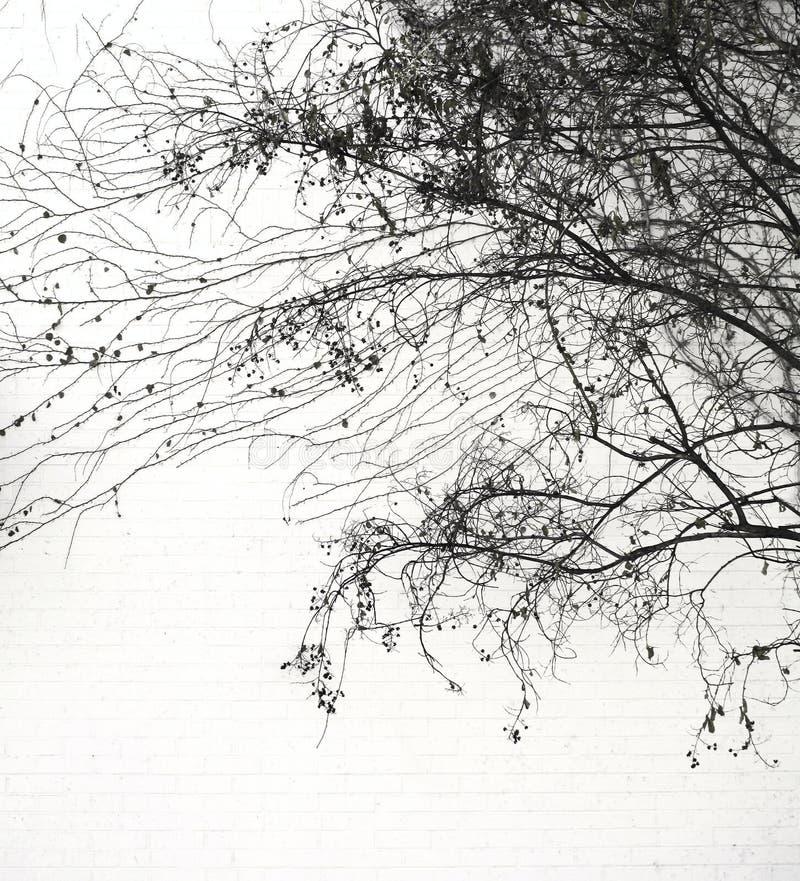 Lacy Urban Tree Silhouette fotografie stock