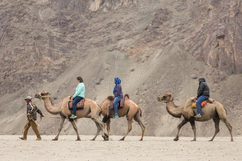 Indian tourists riding camels during safari in Nubra valley in Ladakh, India stock images