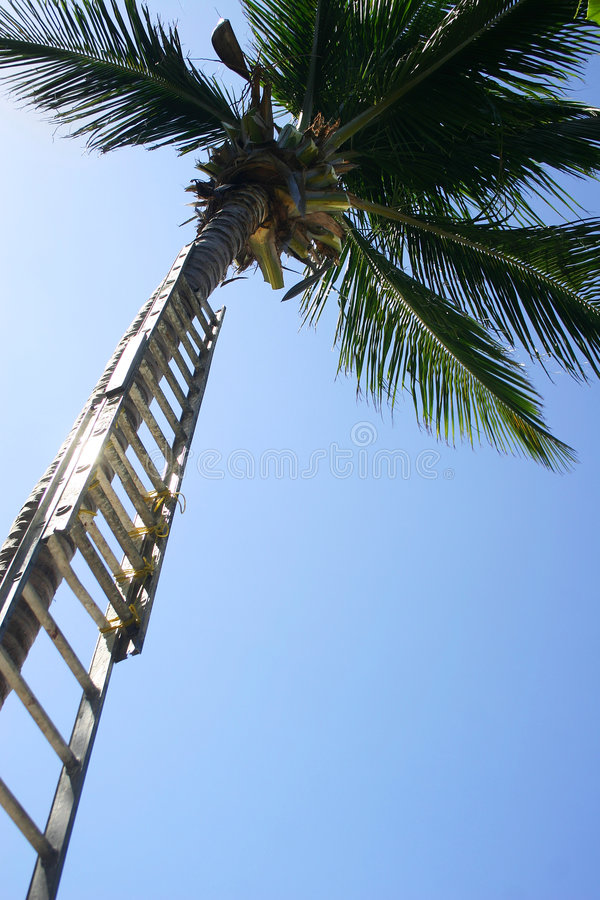 Download Ladder up Palm stock photo. Image of crown, promotion, tree - 461296