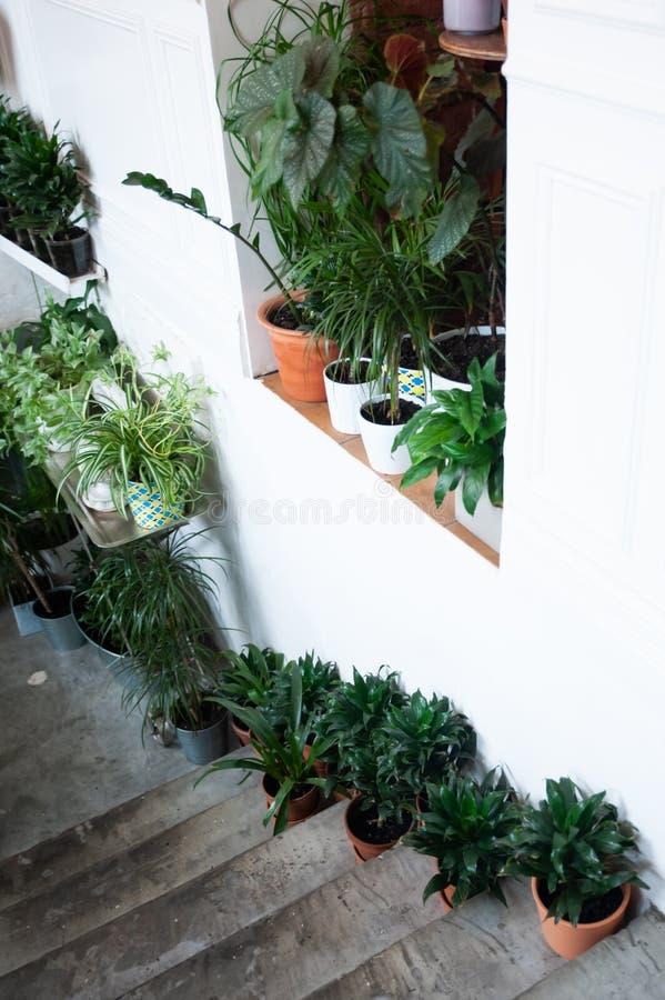 Lade in växter på trappan, dekor royaltyfri bild