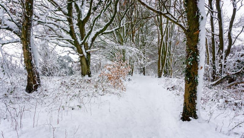 Laden bana för snö till och med ett härligt trä i den engelska bygden royaltyfria foton