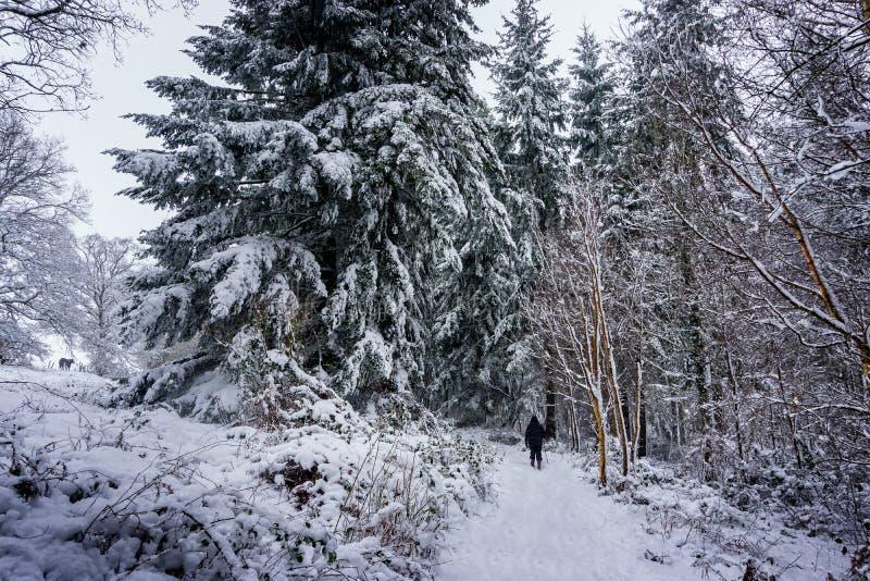 Laden bana för snö till och med ett härligt trä i den engelska bygden arkivbild