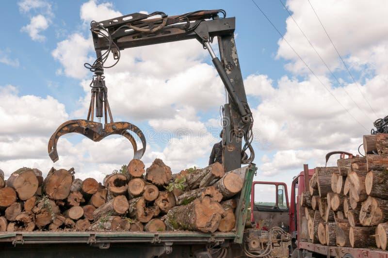 Laden des gefällten Bauholzes in einem LKW mit Kran stockfotografie