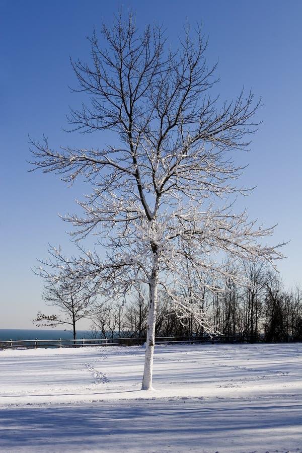 laden snowtreevinter arkivfoto