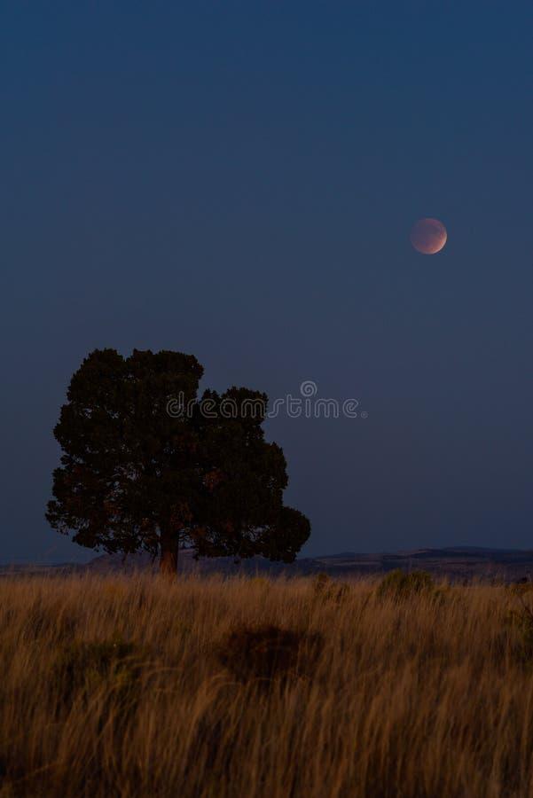 Ladera, árbol y luna herbosos imagenes de archivo