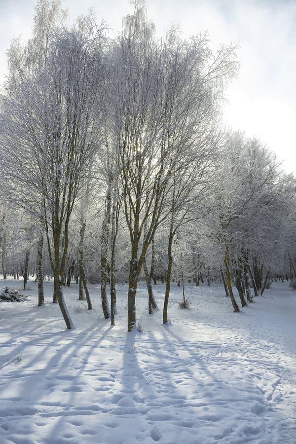 Ladera hivernal foto de archivo libre de regalías