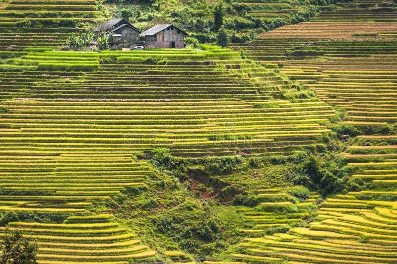 Ladera llenada de las terrazas del arroz foto de archivo libre de regalías
