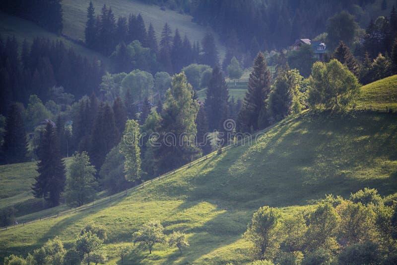 Laderas con los árboles encendidos con luz del sol fotos de archivo libres de regalías