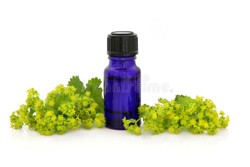 Download Ladies Mantle Herb Therapy stock image. Image of medicinal - 23193795