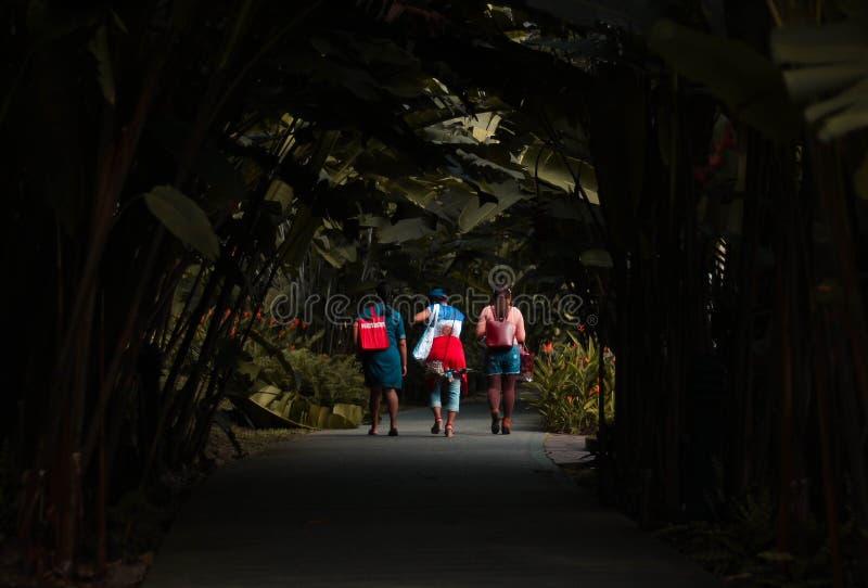 Ladies walking through plants royalty free stock image