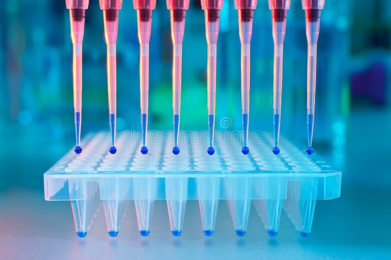 Lading van PCR met pipet met meerdere kanalen stock afbeeldingen
