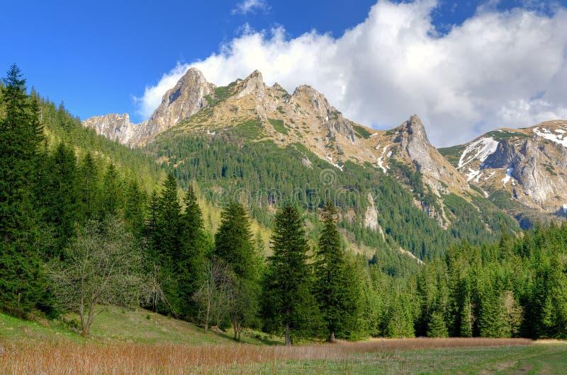 Ladnscape da montanha da mola imagem de stock