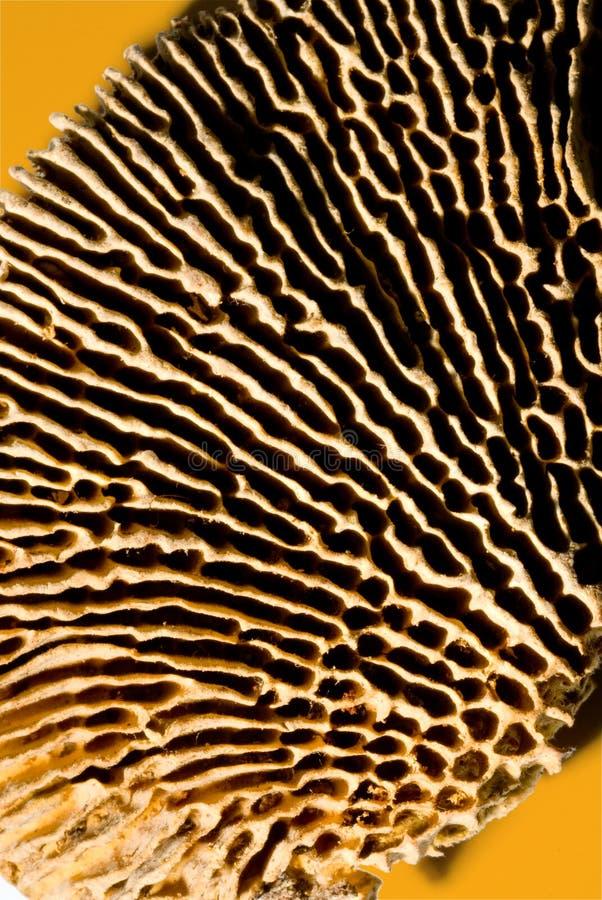 Lado de baixo secado do cogumelo fotos de stock royalty free