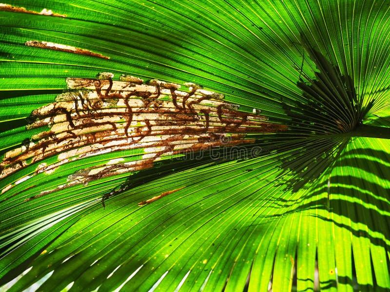 Lado de baixo verde da folha da palmeira do detalhe fotos de stock royalty free