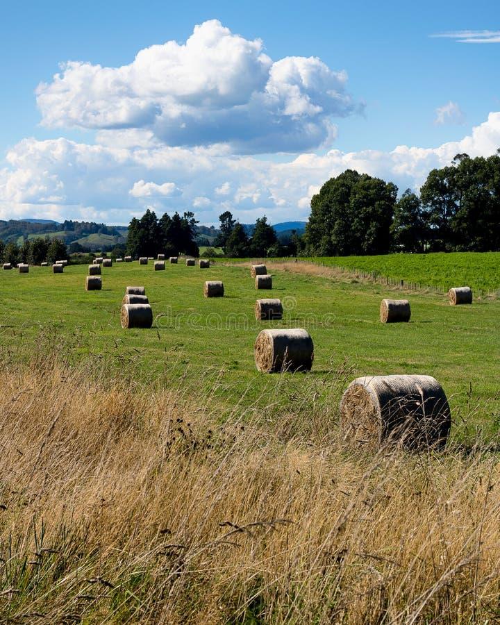 Lado del país de Nueva Zelanda imagen de archivo libre de regalías