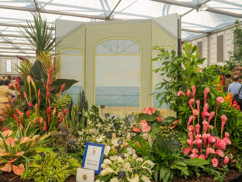Lado derecho Chelsea Flower Show 2017 Una exhibición hortícola de la sociedad de Barbados en el gran pabellón imágenes de archivo libres de regalías