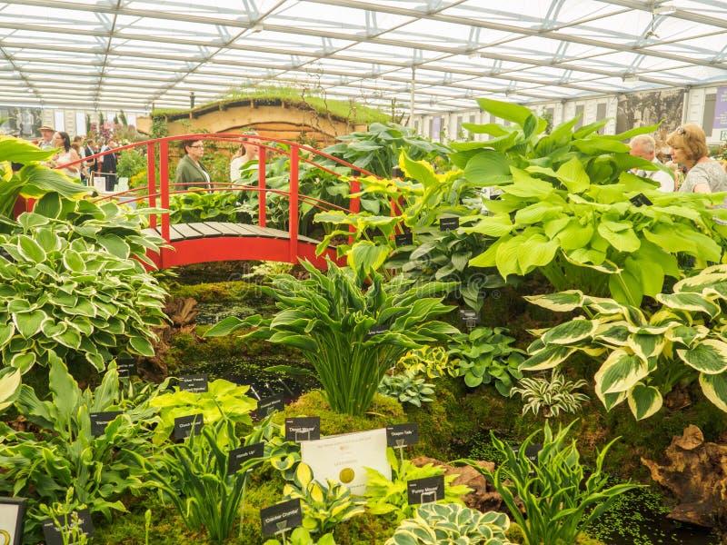 Lado derecho Chelsea Flower Show 2017 Visitantes observando exhibiciones de los hostas del gran pabellón fotografía de archivo libre de regalías