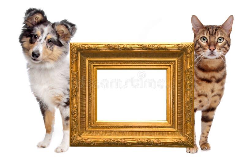 Lado do gato e do cão ao lado imagens de stock royalty free