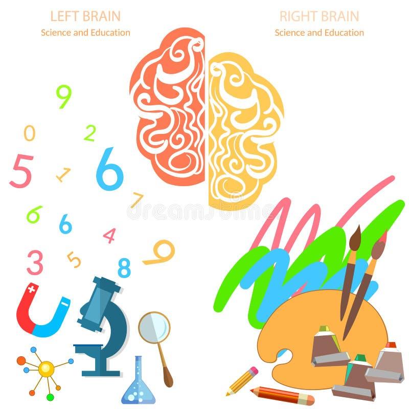 Lado esquerdo e direito da lógica do cérebro e da educação da faculdade criadora ilustração do vetor
