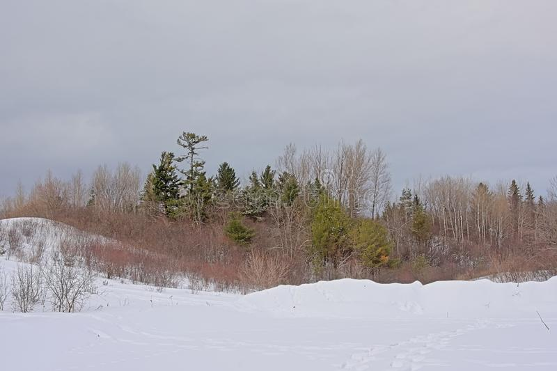 Lado rodante de la colina cubierto en nieve con los árboles desnudos y coníferos y los arbustos imagenes de archivo