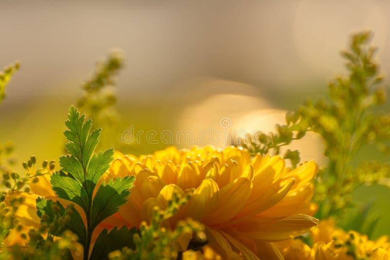 Lado-vista da flor amarela imagem de stock