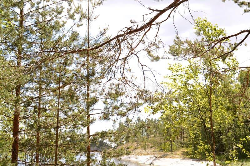 Ladoga skerries, Karelië stock afbeelding