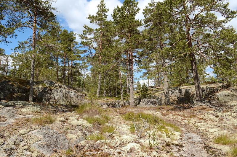The Ladoga skerries, Karelia. The landscape is located on the Ladoga skerries national Park in Karelia. The Park is a national landmark due to the picturesque royalty free stock image