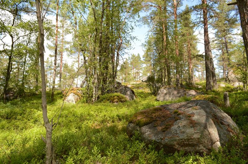 The Ladoga skerries, Karelia. The landscape is located on the Ladoga skerries national Park in Karelia. The Park is a national landmark due to the picturesque stock photography