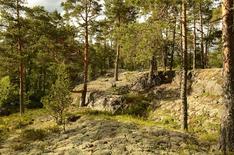 The Ladoga skerries, Karelia. The landscape is located on the Ladoga skerries national Park in Karelia. The Park is a national landmark due to the picturesque stock photo
