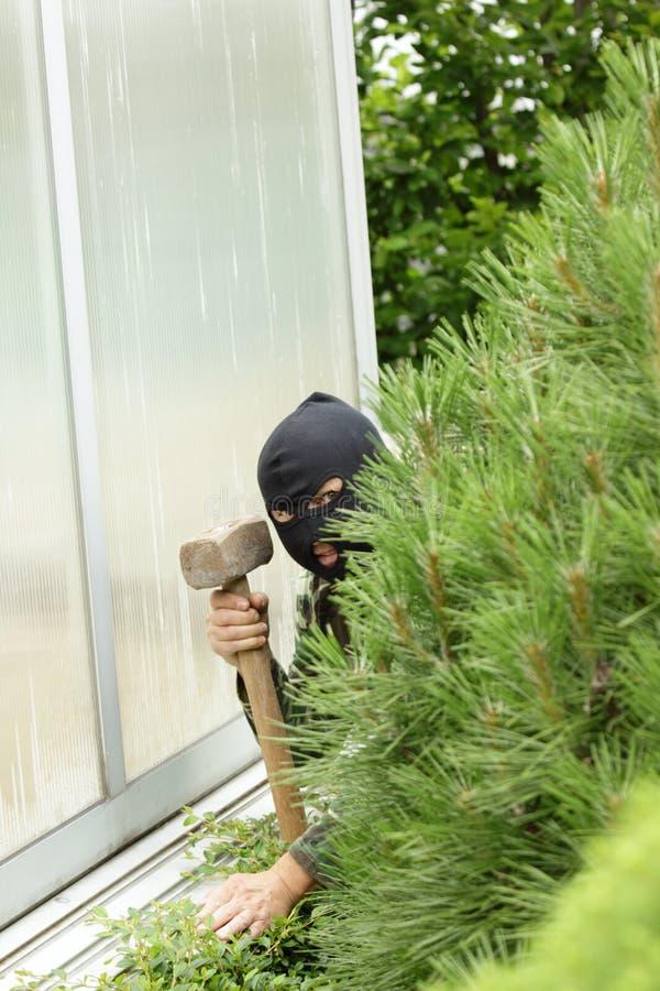 Ladrão no jardim fotos de stock