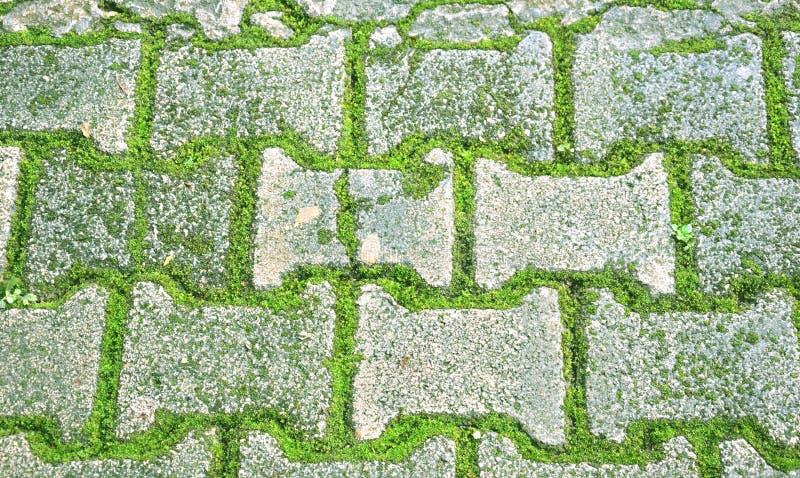 Ladrillo con el piso del musgo foto de archivo