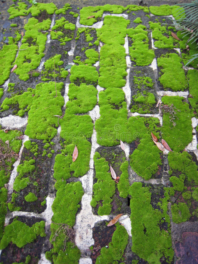 Ladrillo cubierto de musgo 2 imagen de archivo