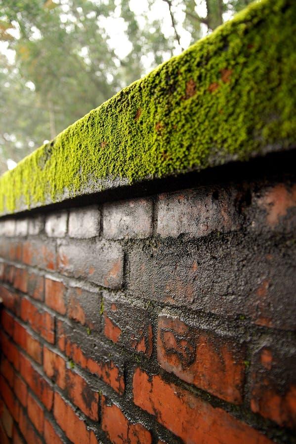 Ladrillo, pared, musgo foto de archivo